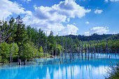 This is a pond famous for Biei and it is called a blue pond