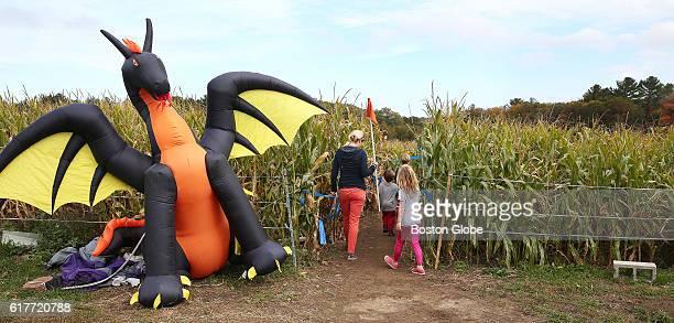 The Boardman family of Hamilton ventures into the corn maze at Marini Farm Corn Maze in Ipswich Mass on Oct 20 2016