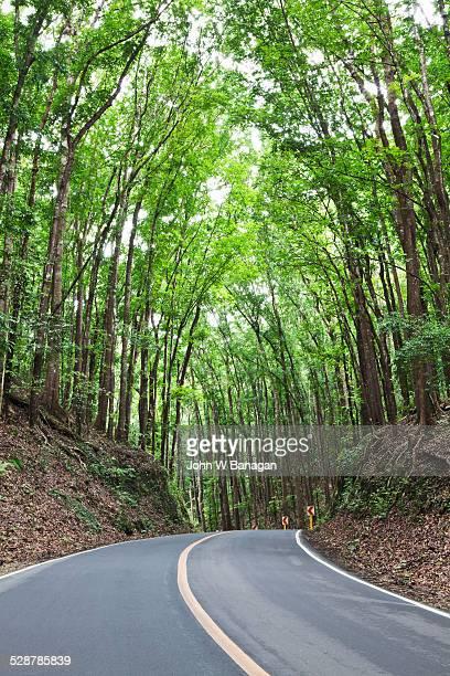 The Bohol forest.  Bohol