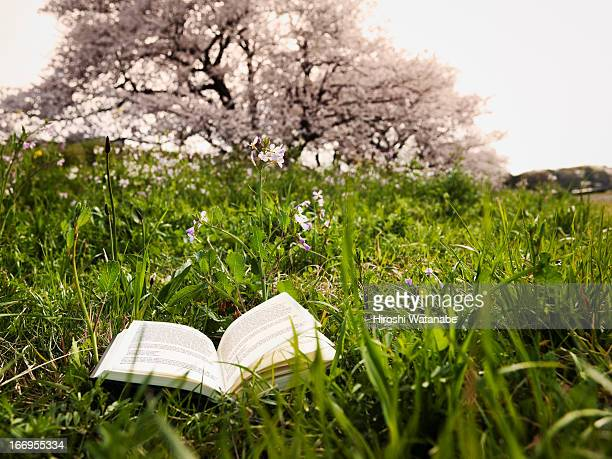 The book on the field