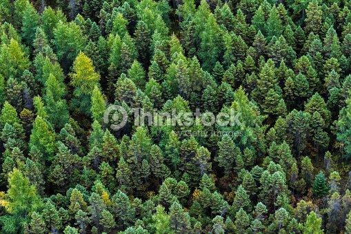 the boreal forest ストックフォト thinkstock