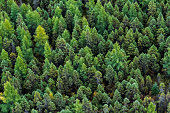 Aerial summer view from above a boreal forest in Quebec, Canada