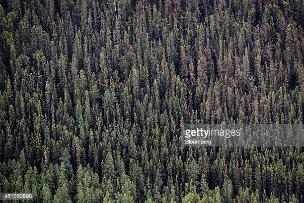 The boreal forest stands in this aerial photograph taken north of Fort McMurray Alberta Canada on Wednesday June 19 2014 Heavy crude from the oil...