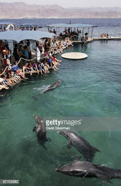 The bottlenose dolphins at the Dolphin Reef center research center and attraction greet viitors April 27 2005 in the Israeli Red Sea resort of Eilat...