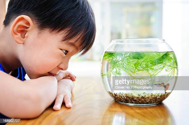 The boy looked at the fish in the fish tank.