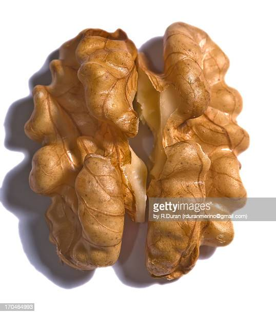 the brain of the nut