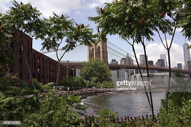 The Brooklyn Bridge is seen from a park in in DUMBO an acronym for Down Under the Manhattan Bridge Overpass on August 19 2014 in the Brooklyn borough...