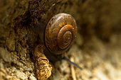 A land snail with a right-handed helix shell, is crawling downwards of a brick to a dark and damp place. The snail has a strong muscular foot, and uses mucus to enable to crawl over a rough surface.