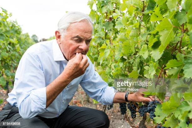 the businessman and winegrower with more than forty vineyards in the world Bernard Magrez poses in the vineyards of his castle Pape Clément on...