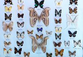 The butterfly collection in the nature reserve includes many butterflies with different color patterns complementing the rich natural ecosystem.
