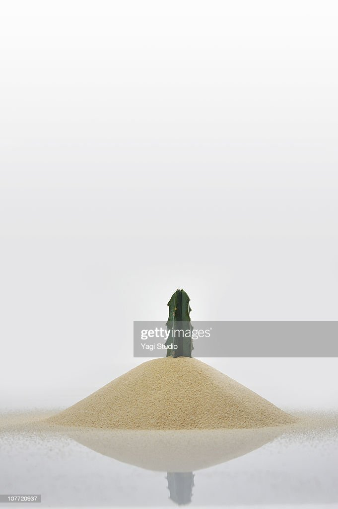 The cactus buried in the sand : Stock Photo