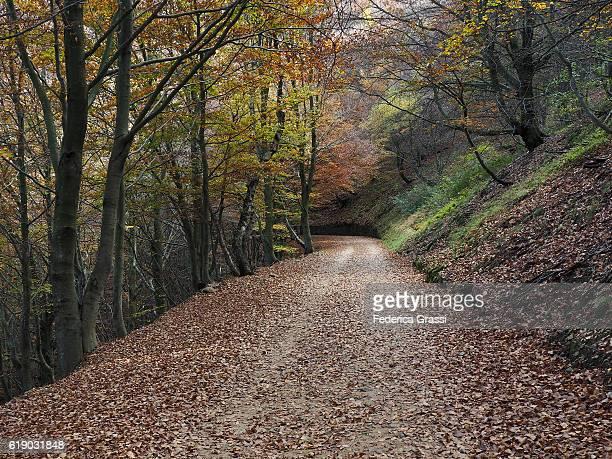 The Cadorna Road, Val Grande National Park, Piedmont, Northern Italy