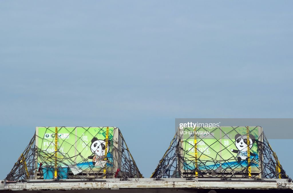 The cages of Feng Yi (L) and Fu Wa (R) are seen upon its arrival from China at MASkargo near Kuala Lumpur International Airport (KLIA) in Sepang on May 21, 2014. Fu Wa and Feng Yi are on loan for 10 years to mark the 40th anniversary of Malaysia-China diplomatic relations.