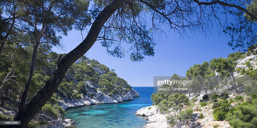 The Calanque de Port-Pin framed by pine trees with hiker discernible.