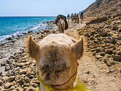 First person camel ride along the coast of the Golden City famous for its sunsets and Blue Hole.