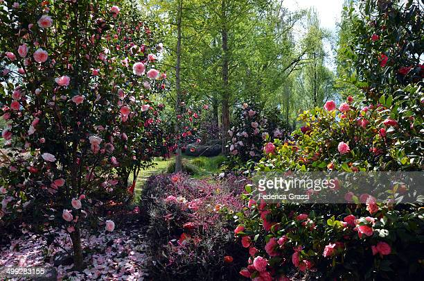 The Camellia Park