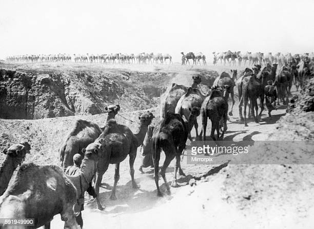 The camels of the Imperial Camel Corps part of the Egyptian Expeditionary Force seen here returning from watering on the Palestine front during the...