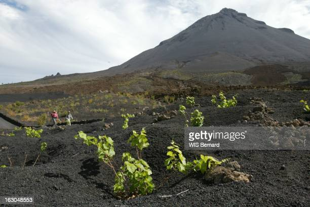 culture de vignes au pied du volcan du Pico