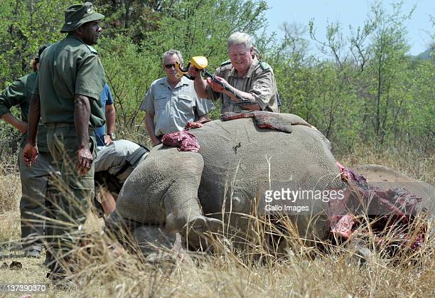 *Warning graphic content* NORTH WEST SOUTH AFRICA SEPTEMBER 29 The carcass of a white rhino is seen on a farm on September 29 2011 in North West...