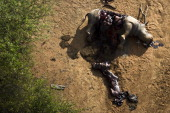 The carcass of Longhorn a 24 yearold Rhino Cow at the Finfoot Lake Reserve on November 24 2012 in North West South Africa Longhorn was among the...