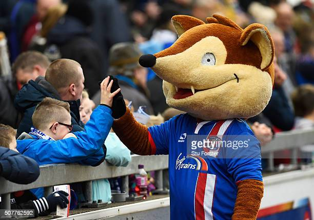 The Carlisle United mascot Olga the Fox greets fans prior to the Emirates FA Cup Fourth Round match between Carlisle United and Everton at Brunton...