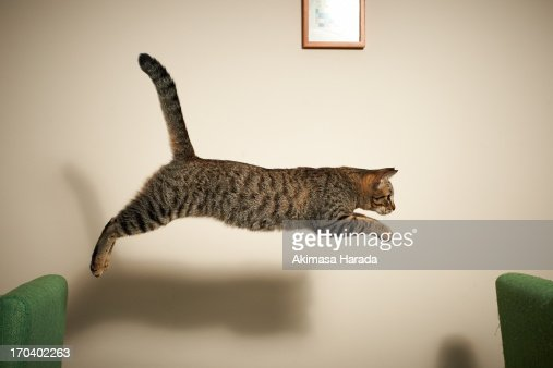 The cat jumping from chair to chair : Stock Photo