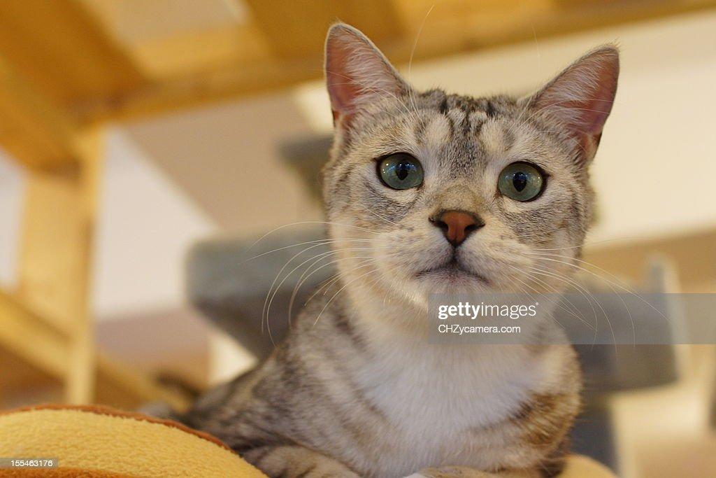 the Cat : Stock Photo