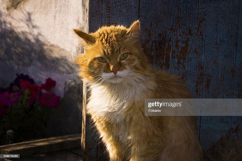 the cat portrait : Stock Photo