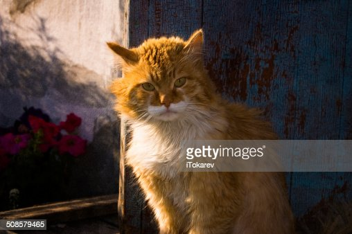 the cat portrait : Stockfoto