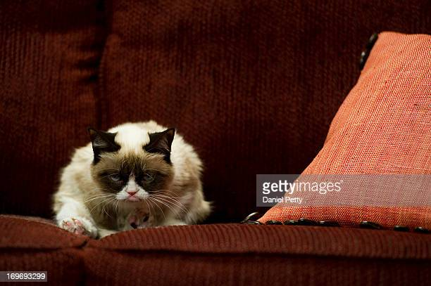 The cat 'Tardar Sauce' better known by its viral Internet meme name 'Grumpy Cat' appears during a press event during the 2013 SXSW Music Film...