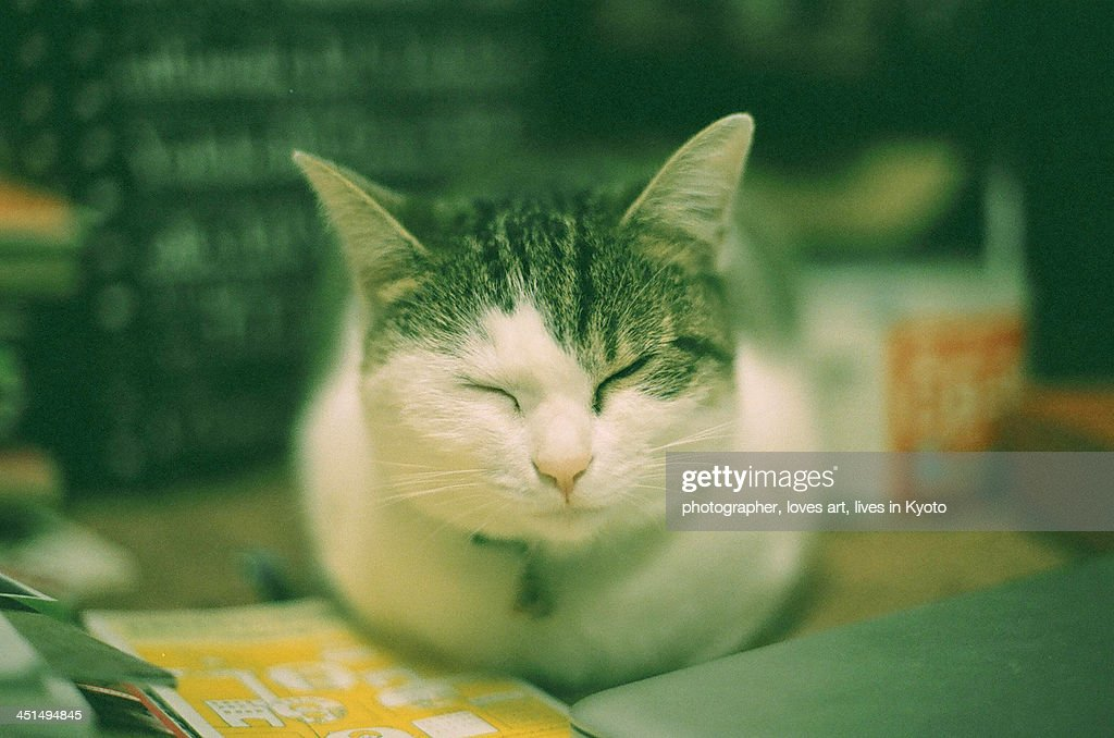 The cat which became perfectly round in a winter c : Stock Photo