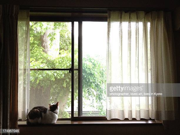 The cat which looks at outside from a window