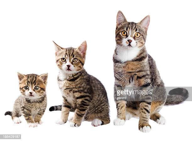 Il gatto con tre vite