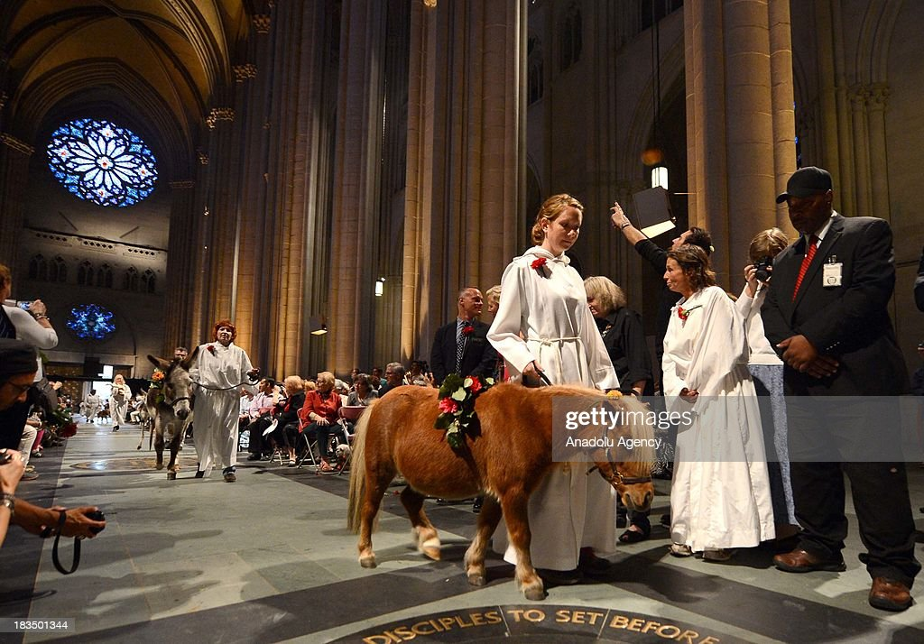 The celebration of animal blessing draw humans alike during the 29th Annual Blessing of the Animals at 121 years old St. John Cathedral the Devine on October 6, 2013 on Amsterdam Ave, in New York, USA. Each year the Blessing of the Animals held at the Cathedral of St. John the Devine draws crowds of animal lovers and owners looking to get a glimpse of the animals being blessed. Animals that have participated in this year include camel, alpacas, donkeys, kangaroos, turtles, small horses, yak, lama, geese, snakes, dogs, parrots, and many other kinds of animals. Devotees bring their pets to the churches to have them blessed in honor of St. Francis of Assisi, the patron saint of animals.