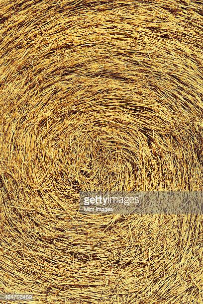 The centre of a bale of straw,tightly packed.