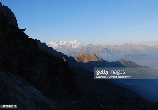 The chamois and Monte Rosa.