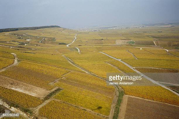 The Champagne Vineyards