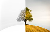A lonely tree on a hill.. The change between winter, spring and fall.