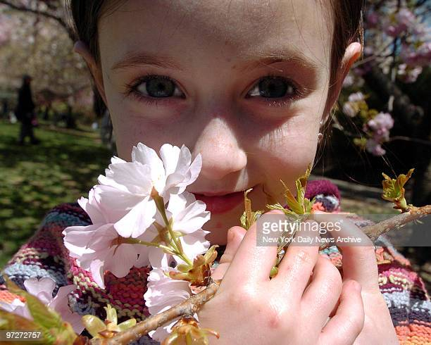 The cherry blossoms were even more in bloom on this Tuesday afternoon at the Brooklyn Botanical Gardens Abigail Gleiberman was able to enjoy them in...