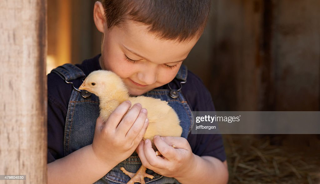 The chick whisperer : Stock Photo