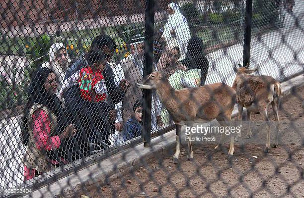 The children were enjoying watching the deer in the cage Animals are seen in Lahores ZOO in World Wildlife Day The General Assembly takes note of the...