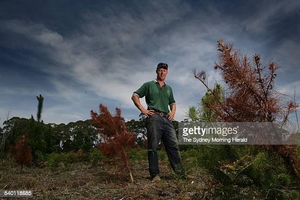 The Christmas Tree Man John Boag with some of the dead trees on his property at Wingello in the Southern Highlands on 14 December 2006 Mr Boag has...