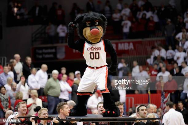 The Cincinnati Bearcats mascot performs during the game against the Connecticut Huskies at Fifth Third Arena on February 4 2017 in Cincinnati Ohio