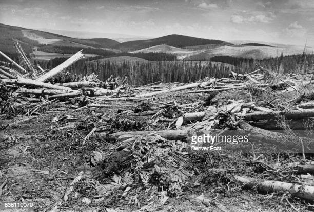 The cleanup of forest land and logging debris is yet to be done But Mrs Hayward protests 'It'll take 50 years to get another forest started' As far...