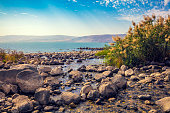 The coast of the Sea of Galilee near Ein Eyov Waterfall in Tabgha, Israel