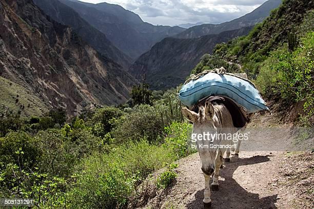 The Colca Canyon