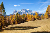 The colors of autumn in a fir forest, Val di Funes. Bolzano, South Tyrol, Dolomites, Italy.