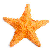 The common Caribbean starfish (Oreaster reticulatus) isolated with shadow on a white background.