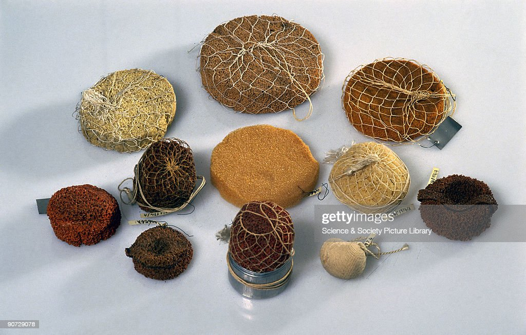 The contraceptive sponge, made of natural and synthetic materials, was designed to be inserted into the woman's vagina prior to sexual intercourse. It worked as a barrier method of contraception, preventing sperm from moving towards the uterus. Originally, natural sea sponges were used and these were sometimes soaked in vinegar or lemon juice, which were added as a spermicide. The example on the far right is made out rubber and has a central cavity for a suppository and a handle for removal. �Occlusator� is its brand name.