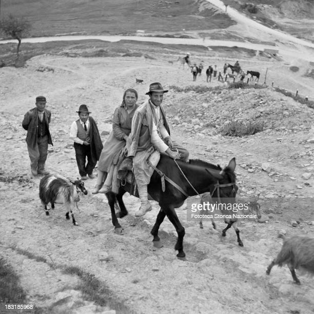 The couple of peasants ride their mule followed by three goats that they have driven to pasture Lucania Italy 1957 From the exhibition 'Olives and...